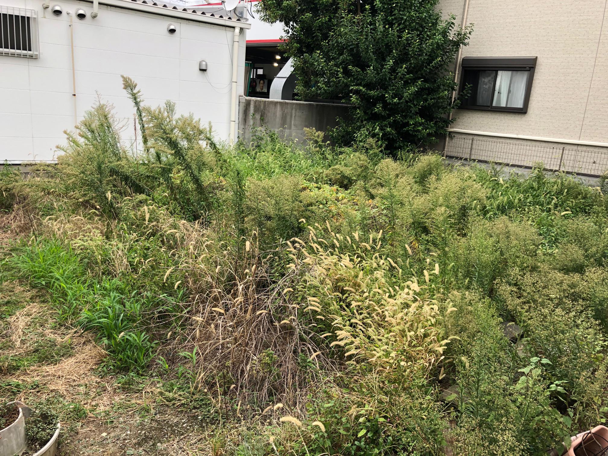 【兵庫県尼崎市】雑草が生えて、虫が大量に発生しているので綺麗に舗装してほしい